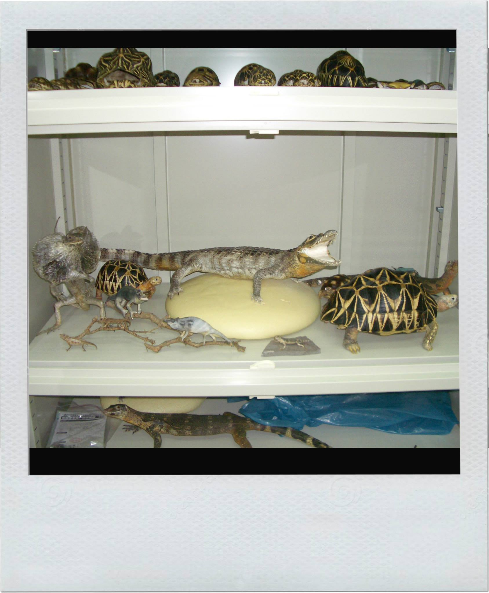 Various Reptile specimen stored in Eureka Dry Tech BE-2001W Entomlogy Dry Cabinet