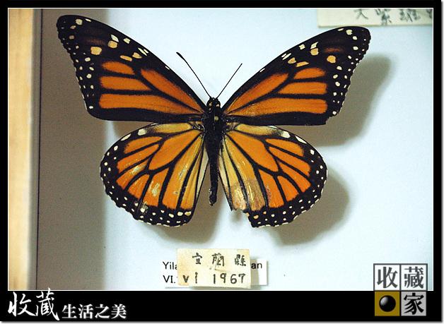 Eureka Dry Cabinet for butterfly specimen